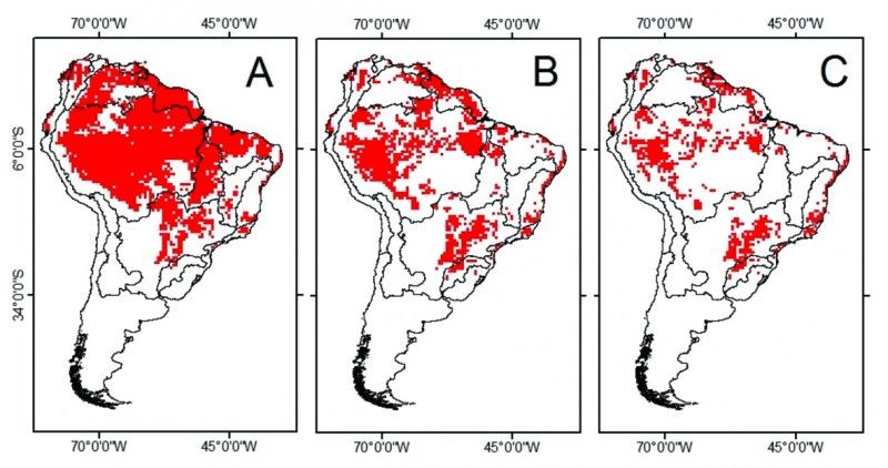 Escenarios generados por el cambio climático en la distribución del tambaqui