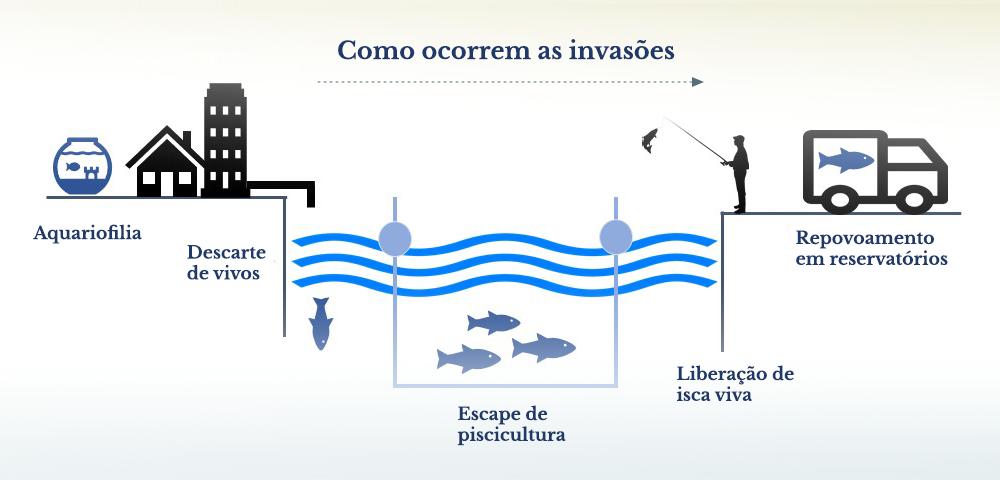 Como ocorrem as invações (português)