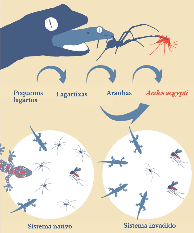 Proliferação da dengue por espécies invasoras (português)