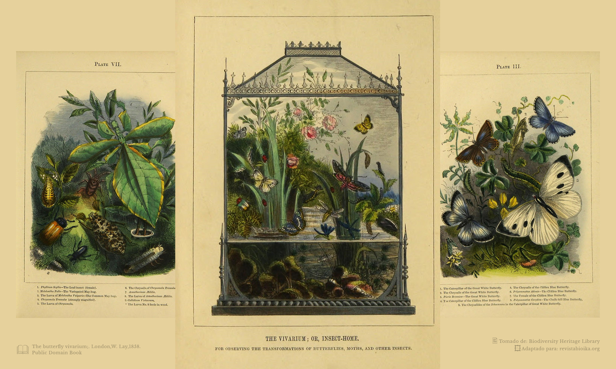 "Composición con ilustraciones de ""The Vivarium or Insect Home"""