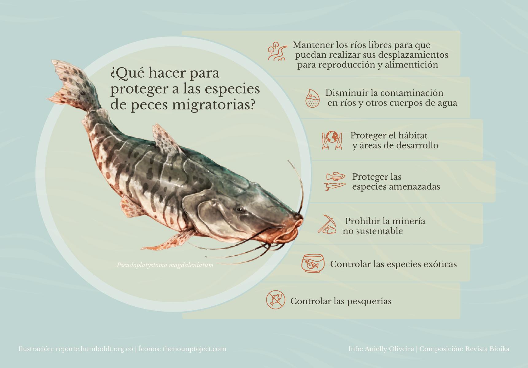 ¿Qué hacer para proteger a las especies de peces migratorias? (español)