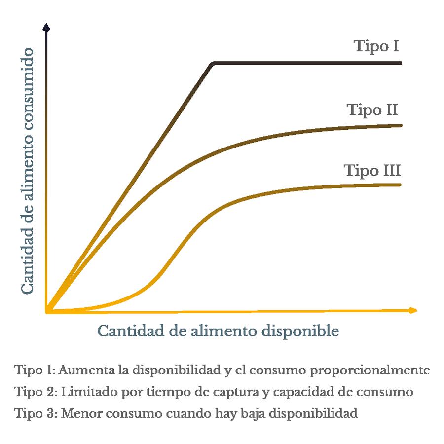 Gráfica: Tipos de respuesta funcional