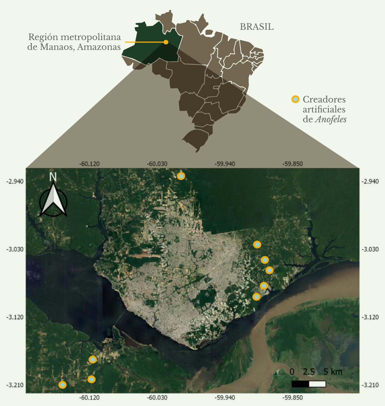 Distribución de criaderos artificiales de anofelinos en la región metropolitana de Manaus, Amazonas