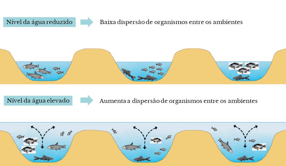 Representação esquemática do resultado encontrado no estudo em relação ao nível da água nas lagoas (PT)