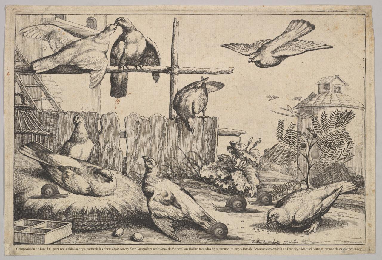 Invasión de palomas, caracoles y leucenas en una tarde de verano en Brasil