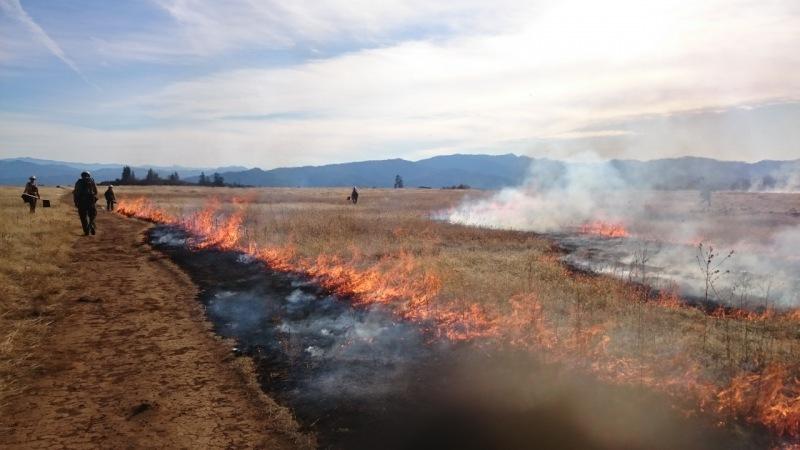 Gramíneas invasoras aumentan el riesgo de incendios forestales