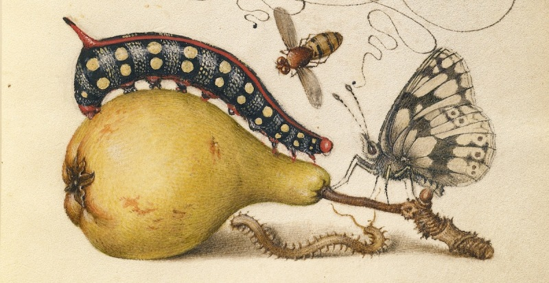 "Ilustración ""Fly, Caterpillar, Pear, and Centipede"" de ""The Model Book of Calligraphy"" (1561–1596)"