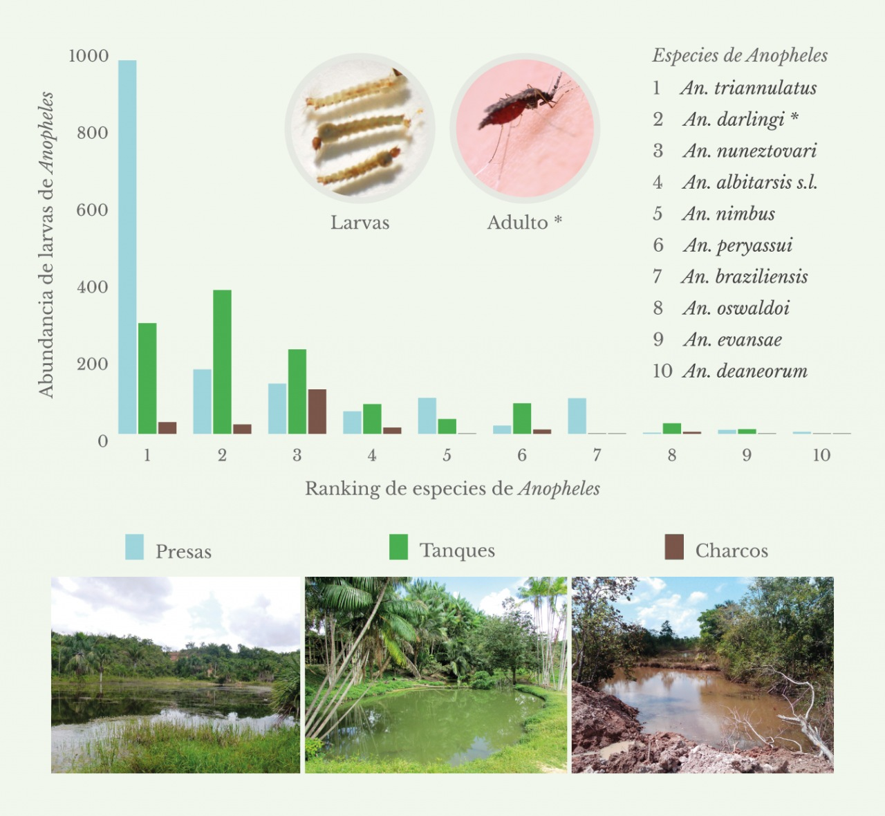 Gráficos de abundancia de larvas de anofelinos