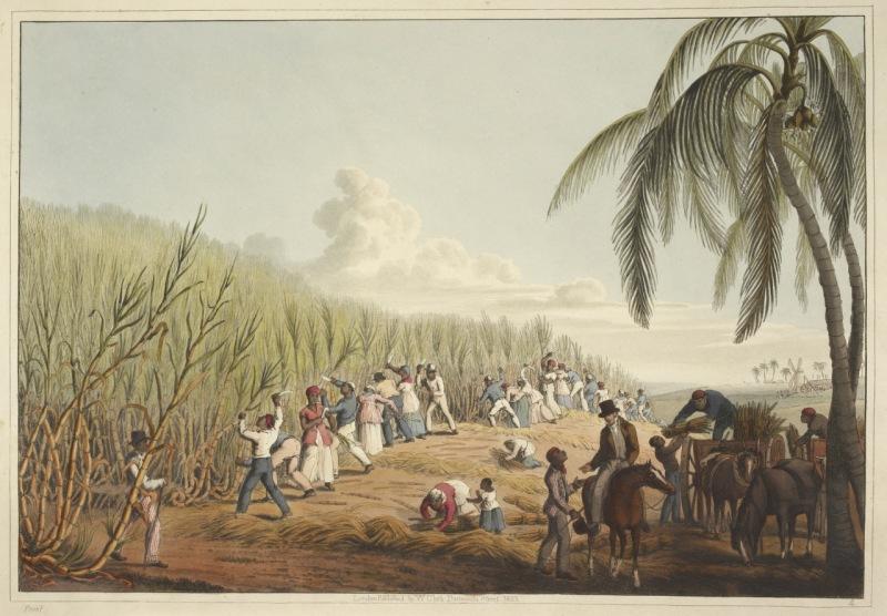 Esclavos cortando la caña de azúcar
