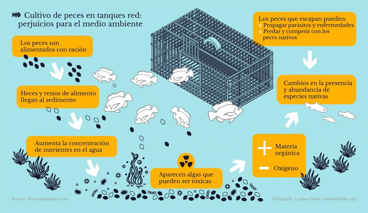 Cultivo de peces en tanques red: perjuicios para el medio ambiente