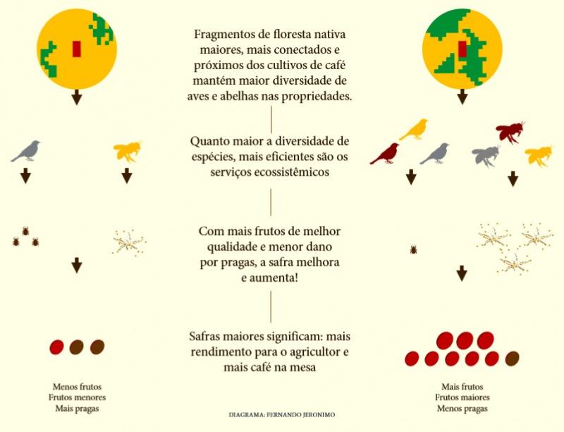 Culturas de café, conectividade e biodiversidade