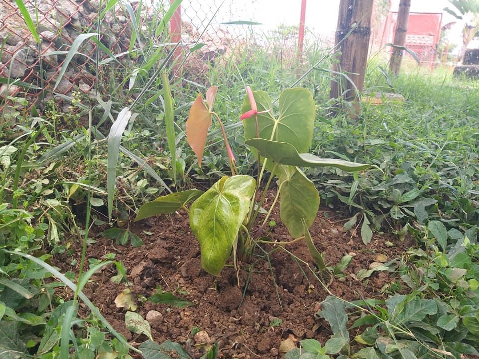 Reflorestamento, realizado por alunos