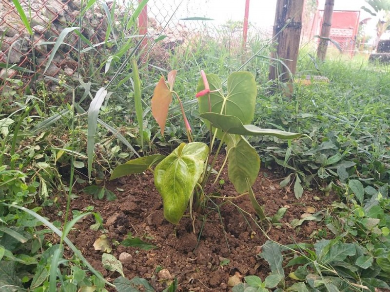 Reforestación, realizada por estudiantes