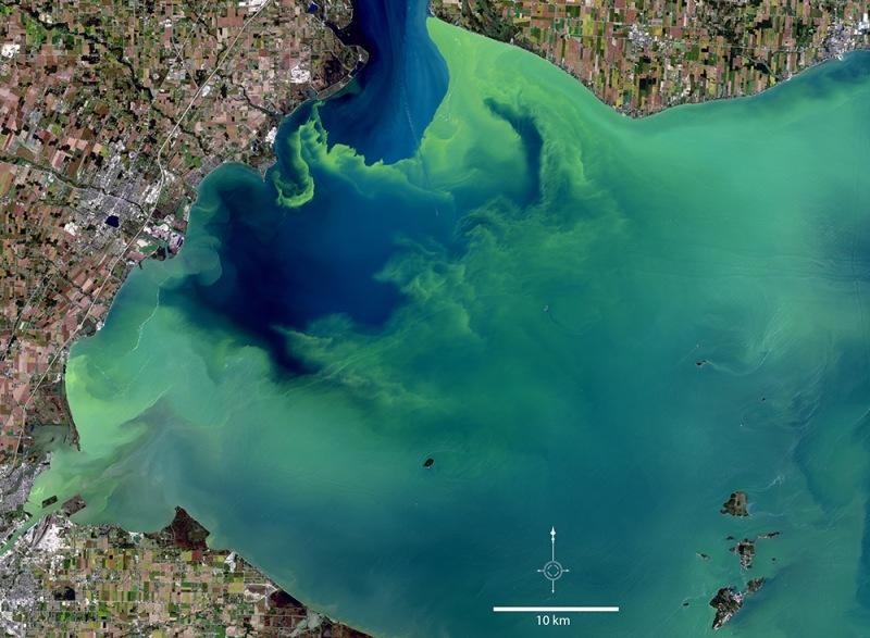 Cianobacterias espacio