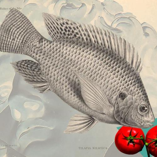 Nem só de tilápia vive o homem: um peixe exótico invade as águas e a mesa dos brasileiros