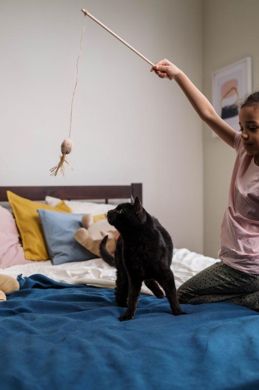 Con el juego, los gatos liberan energía y disminuye su deseo de cazar.