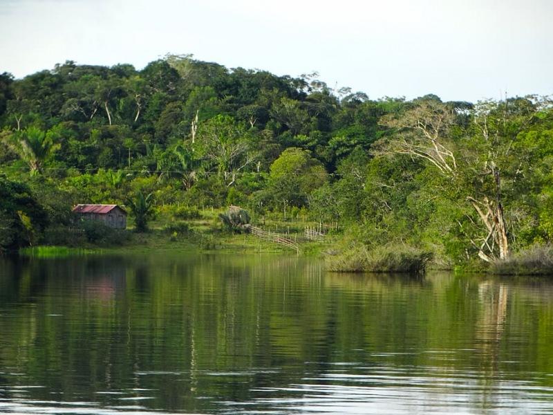 Amazonía y diversidad en Brasil