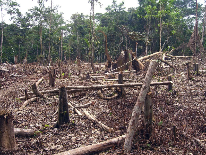 Deforestación en Amazonía colombiana