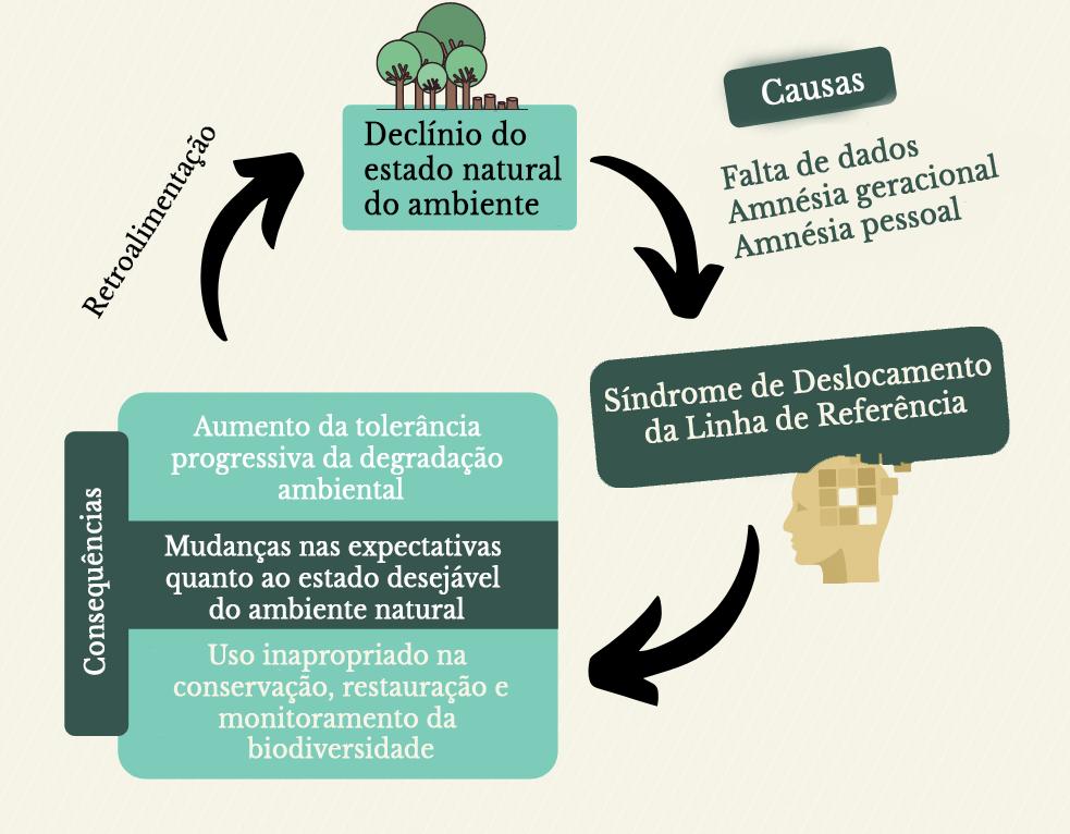 Figura 1 Português