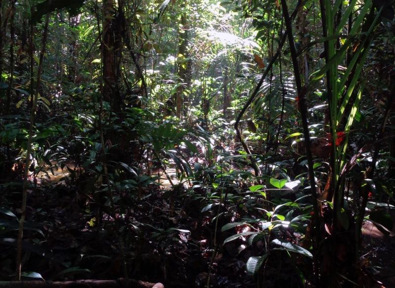 Reserva Forestal Adolpho Ducke, en Manaus, Brasil