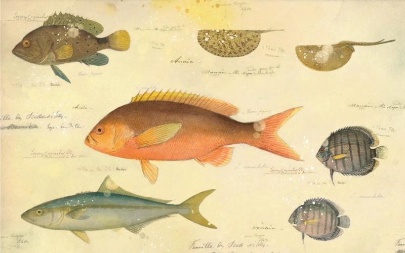 Acuarelas del naturalista suizo Jacques Burkhardt