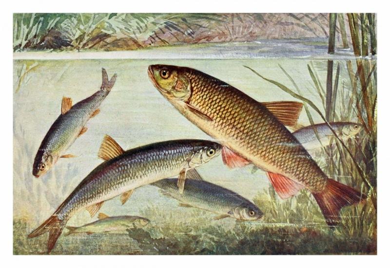 ¿Cómo las condiciones ambientales pueden afectar a los peces?