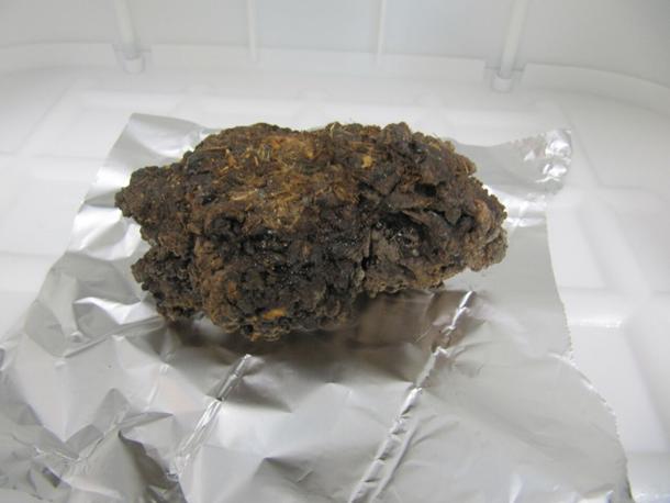 Paleomadriguera en laboratório