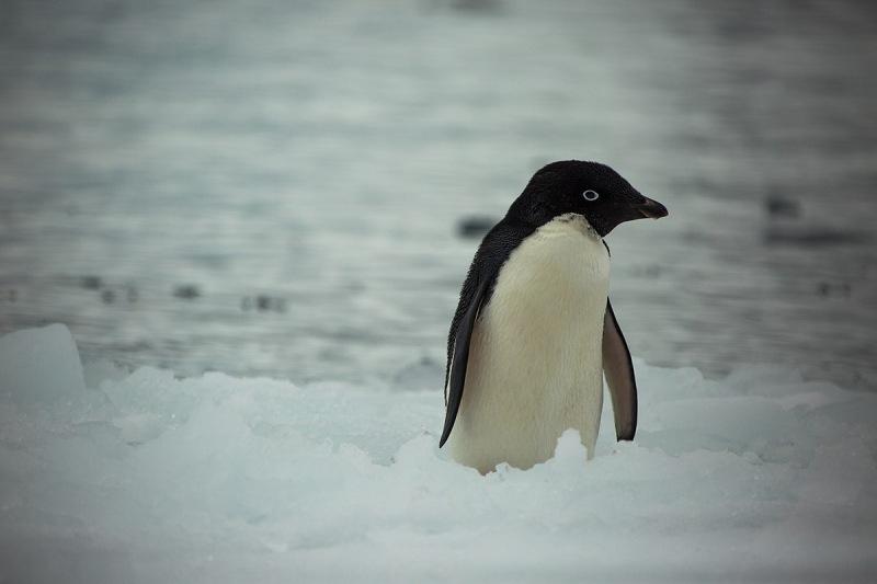 Invasión de especies y calentamiento global: un doble desafío en la Antártida