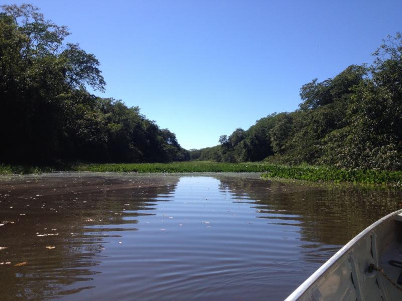 Planicie de inundación del alto río Paraná.