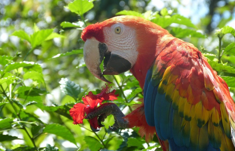 Foto de una guacamaya colorida