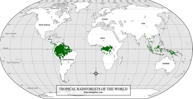 Mapa de distribución de bosques tropicales en el mundo