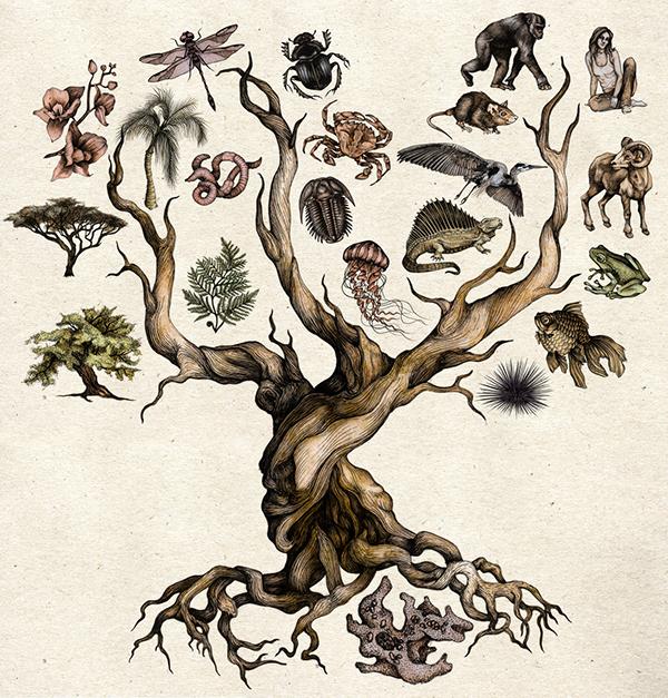 El árbol de la vida de Darwin